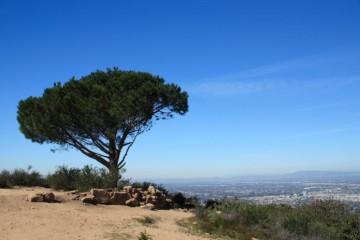 hike_wisdom_tree